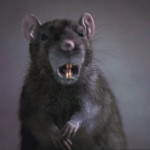 Episode 38: The Rats (2001)
